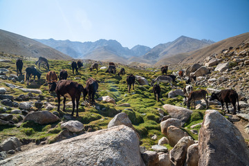 Animals in mountains of Ishkashim, Afghanistan