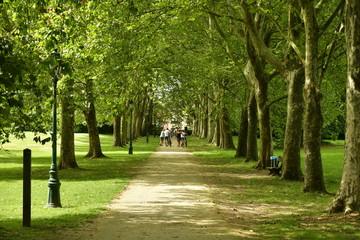 Promenade ombragée entre deux ranger d'arbre au domaine du château Coloma à Sint-Pieter-Leeuw Wall mural