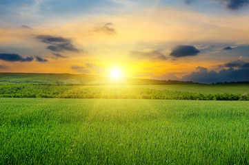Green field, sunrise and blue sky.