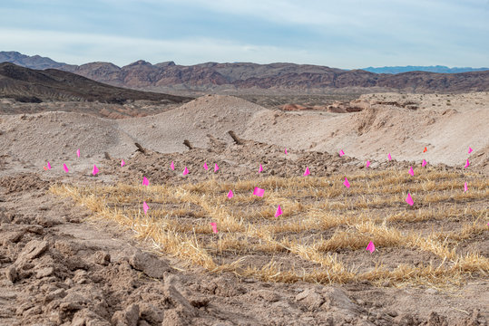 USA, Nevada, Clark County, Lake Mead National Recreation Area. Restoration Ecology. A grid of straw vertical mulch to mitigate erosion and provide microsites for seedling establishment.