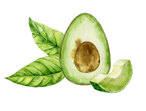 Half avocado with slices and leaves. Ingredient for snack, guacamole and salad. Watercolor illustration of healthy eating. Hand-drawn exotic fruits for recipe, menu, logo, packaging design.