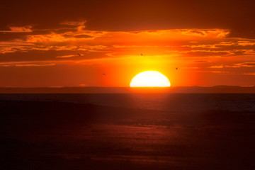 Recess Fitting Magenta Big sun vanishing over the horizon in red orange seascape with seagulls