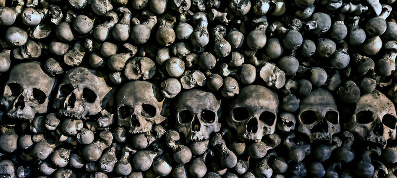Human skeleton bones skulls Memento more.