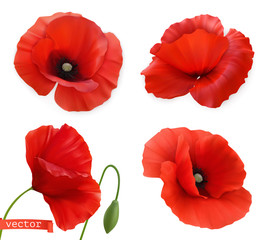 Red poppies. Papaver flowers 3d realistic vector icon set