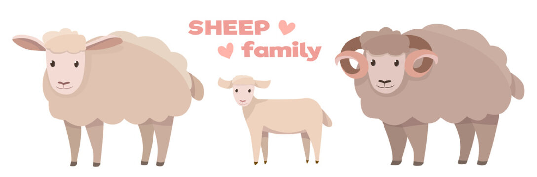 Vector illustrations of sheep family isolated on a white background in cartoon style.