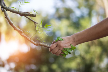 Human handshake with a nature, earth day, human stay together with nature, environment and ecology...