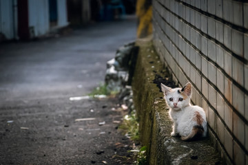 Foto op Plexiglas Kat little stray cat sit at a street
