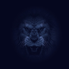 The aggressive face of lion. King of beasts, the biggest cat, shows huge fangs.  Great for user pic, icon, label or tattoo.