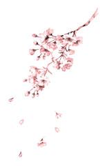 桜線画ピンク