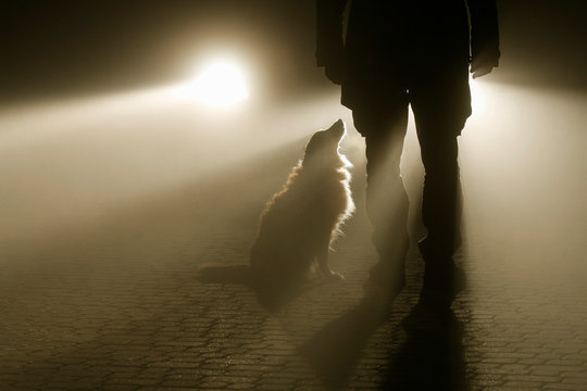 The car headlights illuminate the man and the dog standing on the cobblestone street.