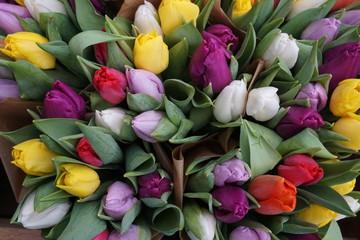 Frühlingsblumen, bunte Tulpen im Bund - spring flowers tulips
