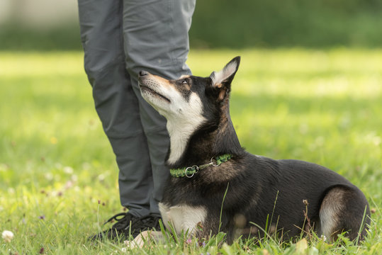 Dog owner trains with his cute Kelpie dog. Working together on the dog place.