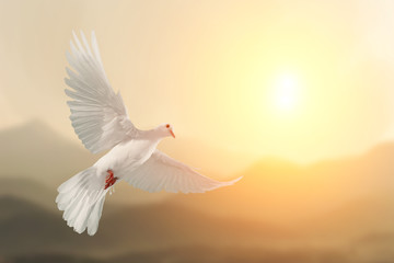 Wall Mural - White Dove flying on Mountain vintage pastel background and beautiful light in international day of peace concept