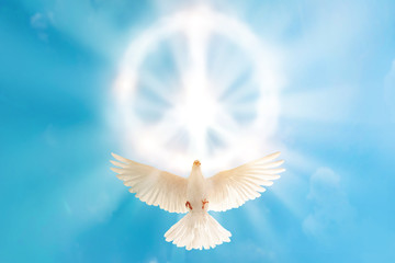 Wall Mural - white dove flying to cloud in pacification sign shape for freedom concept and international day of peace