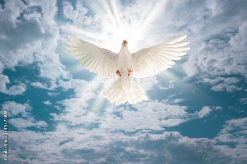 Foto em tela white dove flying on sky in beautiful light for freedom concept