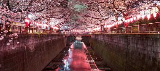 東京都 目黒区 目黒川の夜桜