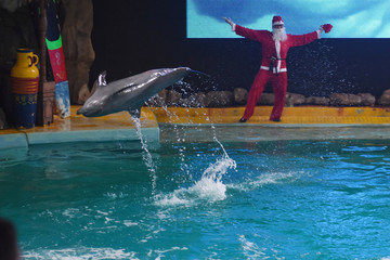 Men wearing Santa Claus costumes play with dolphins during the Christmas holiday at the Ocean Dream Samudra ride, Ancol, Jakarta