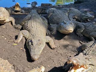Krokodilfarm Guama, Kuba