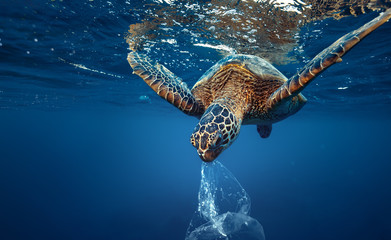 Keuken foto achterwand Schildpad A turtle eating plastic bag underwater in open sea, Water Environmental Pollution Problem