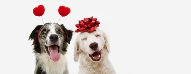 Poster Chien two happy dog present for valentine's day with a red ribbon on head and a heart shape diadem. isolated against white background.