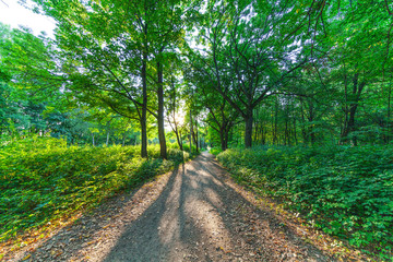Photo sur Aluminium Vert beautiful green forest