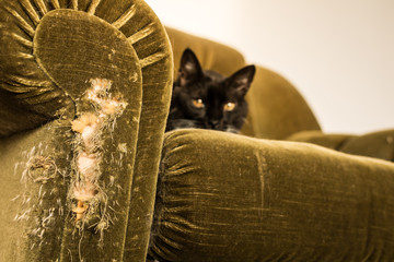 Stuffed chair scratched by cat - horizontal