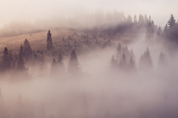 Poster Morning with fog Foggy mountain forest morning.