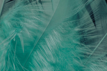Close up Beautiful green trends bird  feather pattern texture background. Macro photography view.
