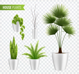 House Plants In Pot Realistic Icon Set