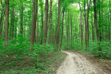 Photo Stands Road in forest green Forest trees. nature green wood sunlight backgrounds