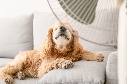 Cute dog in room with operating electric fan