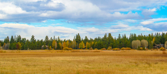 In de dag Honing Gorgeous Autumn Meadow in Sunriver Oregon