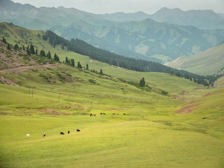 Foto op Canvas Pistache Mountain nature landscape with grassy green meadows and grazing cattle and horses