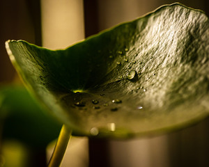 Closeup View of Water Drops on a Leaf