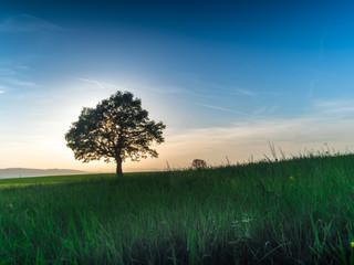 Baum im Frühling Fotoväggar