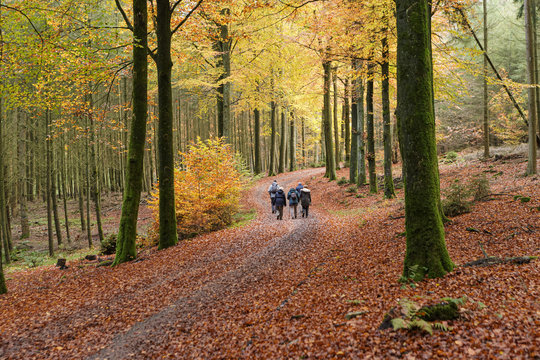 road in forest autumn
