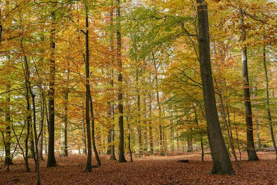 colourfull forest autumn