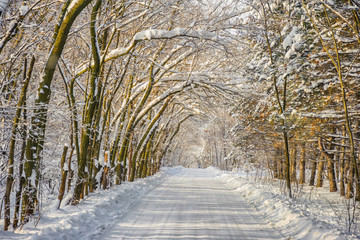 Photo Stands Road in forest Road arch of snowy trees in the forest