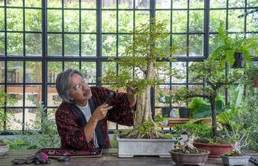 Keuken foto achterwand Bonsai An elderly Asian man bonsai artist is sitting down and cutting the ornamental plants as a hobby at greenhouse .Lifestyle and hobby after retirement concept