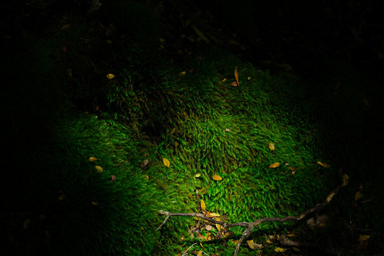Moss in woods, Patagonia Argentina.