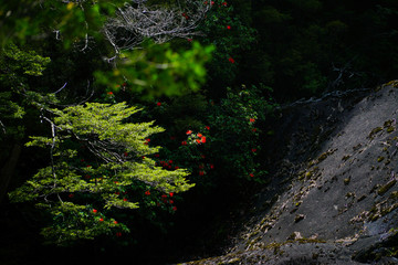Red flowers on green trees and cascade rock