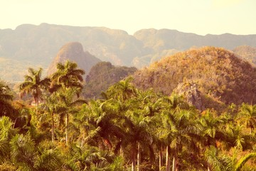 Wall Mural - Cuba - Vinales National Park. Retro filtered colors.