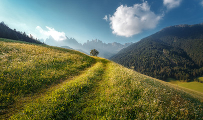 Fotomurales - Beautiful view of idyllic alpine mountain scenery with fresh green grass on meadows and majestic mountain peaks on a beautiful sunny day with blue sky in springtime. Amazing Nature Scenery.