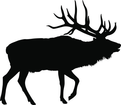 A vector silhouette of a large bull elk bugling.