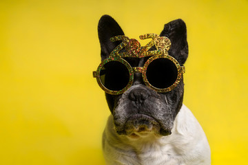 Türaufkleber Französisch bulldog Isolated portrait of french bulldog with year-round party glasses with text 2020 on yellow background. End of the year concept. New Year