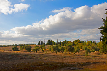 Wall Murals Melon Big brown field with pine and cypress trees. National park in roman city Italica in Seville, Spain