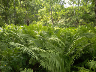 Fotobehang bright green dense grass plants ferns in the forest in summer