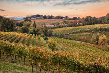 Faenza, Ravenna, Emilia Romagna, Italy: landscape of the countryside with vineyards
