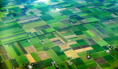 Aerial view of cultivated agricultural farming land with vivid green color Fototapete