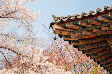 Korean traditional eaves with cherry blossoms at Gaesimsa Temple in Seosan, Korea Wall mural